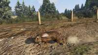 How to become a hare in GTA 5.