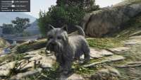 In GTA 5 can be a Terrier!