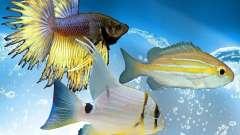 New fish (Ocean)