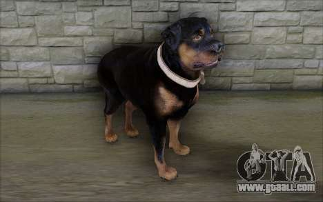 Rottweiler from GTA 5 for GTA San Andreas