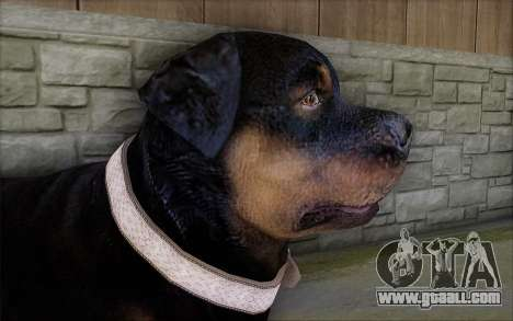 Rottweiler from GTA 5 for GTA San Andreas third screenshot