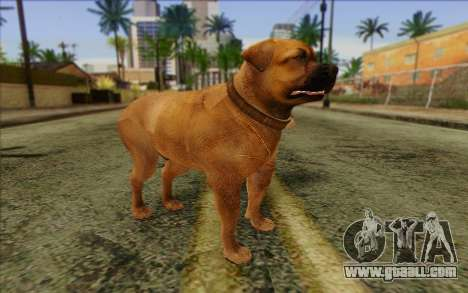 Rottweiler from GTA 5 Skin 2 for GTA San Andreas