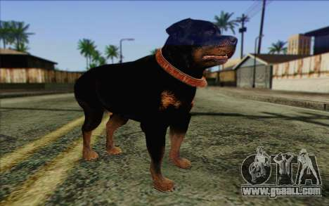Rottweiler from GTA 5 Skin 3 for GTA San Andreas