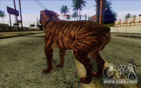 Rottweiler from GTA 5 Skin 1 for GTA San Andreas second screenshot
