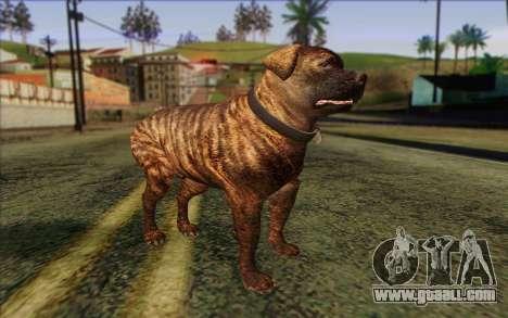 Rottweiler from GTA 5 Skin 1 for GTA San Andreas