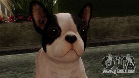 French Bulldog for GTA San Andreas third screenshot